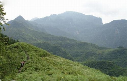 旅游景点-楚雄景点 -紫溪山国家森林公园